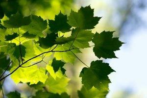 Summer green is rejuvenating