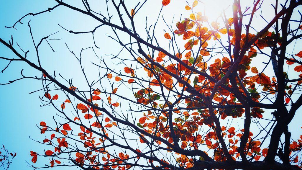 beauty in dormant seasons